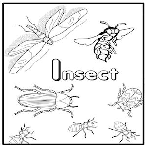 Grades K-2: Intro to Pests - Insect Lesson Plans for Kids