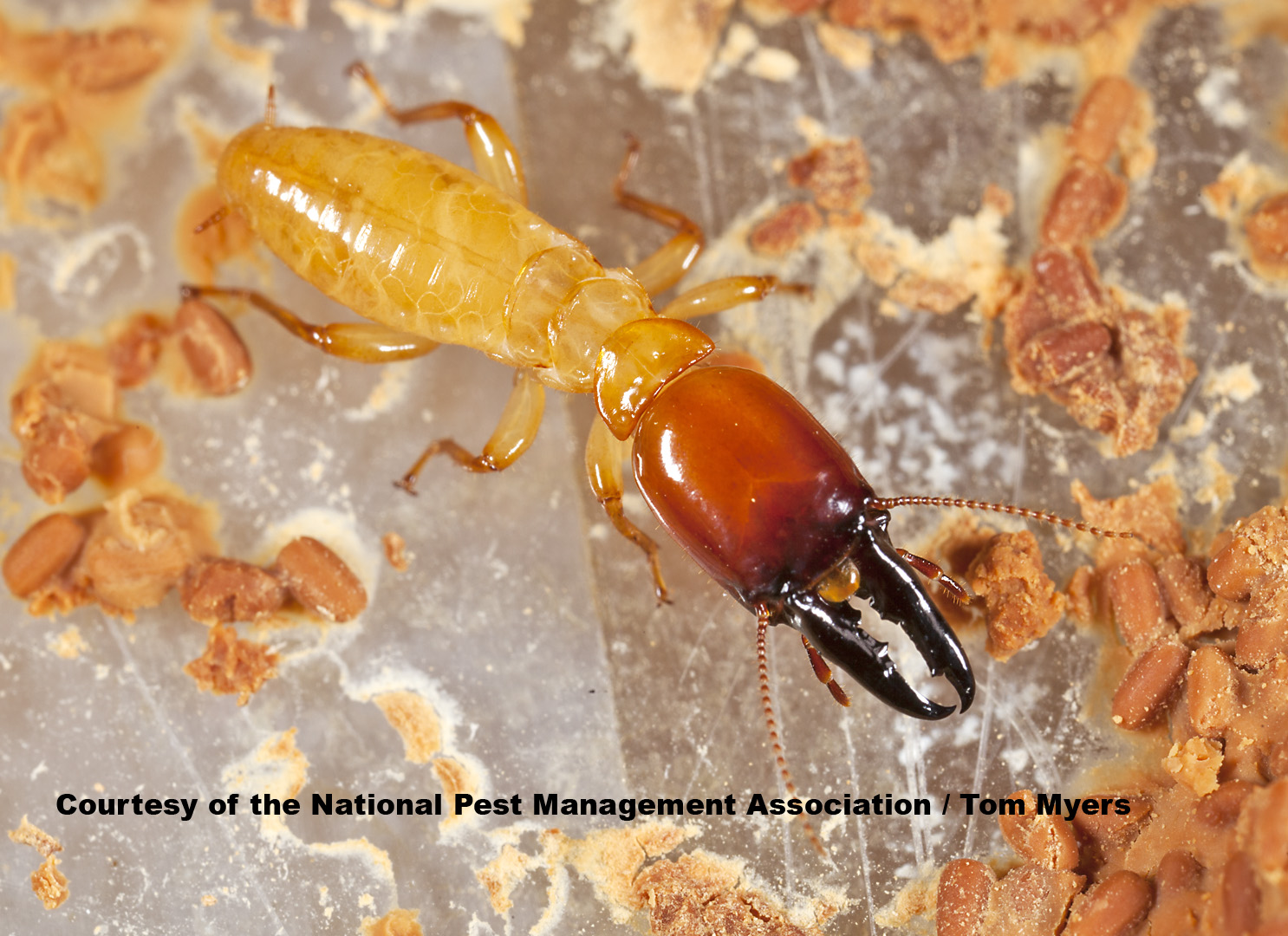 Dampwood Termites - Termite Information for Kids